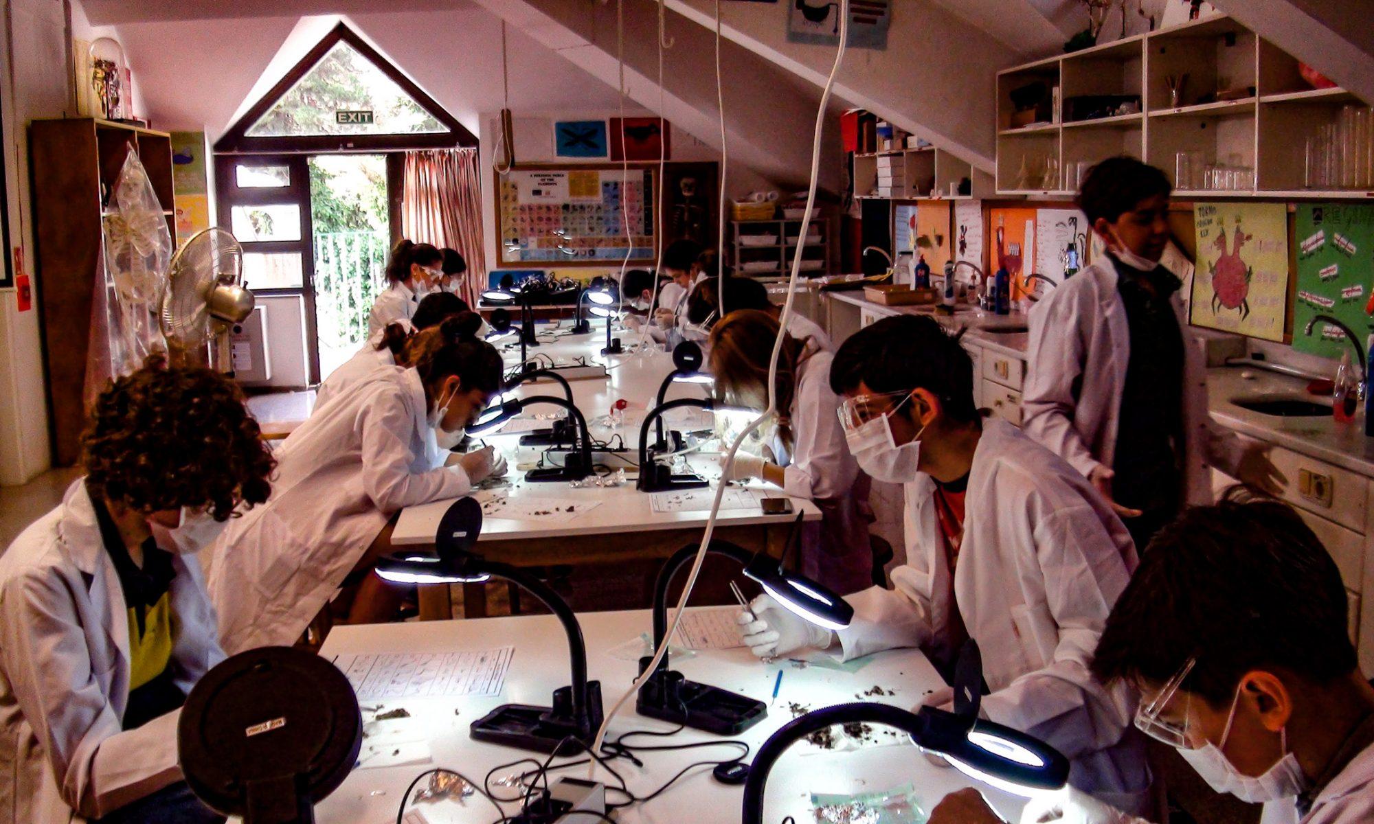 RCS Academy, Owl Pellets